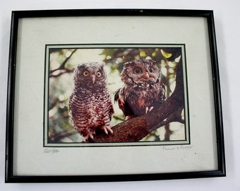 Vintage Framed Owl Photograph - Peanut and Puffer - Robert Matthis