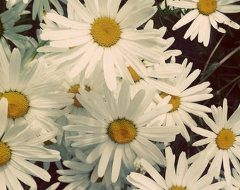 Daisies photo, daisies canvas, daisies print, mini canvas, yellow and white, floral, flower macro, gifts for teens, daisy canvas