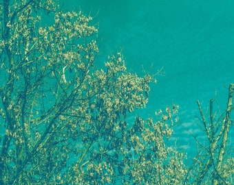 Fine art photography, photography prints, instant download wall art, tree, retro style, green/turquoise