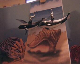 Orca (Whale)