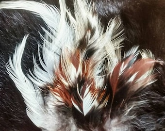Cruelty free feathers, 25 multicolored feathers from a Salmon Faverolles rooster, heritage breed, free range, organic