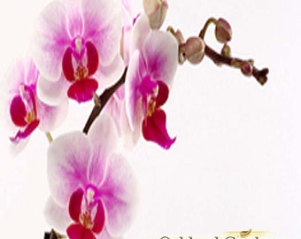 1 oz (30ml)  x NANTUCKET BRIAR - Fragrance Oil - Fresh orchid blended with bergamot, patchouli and musk
