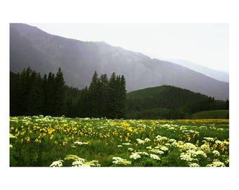 Colorado Mountain Meadow 5x7 color print