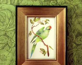 Parrot Art Print – Seychelles Parakeet – Extinct Bird Illustration – 4x6 Print – Bird Lover Gift
