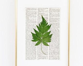 Dictionary Art Fern, nature prints, nature art, botany art, plant prints, fern print, botanical illustration, Pressed Plant Prints, #193-7