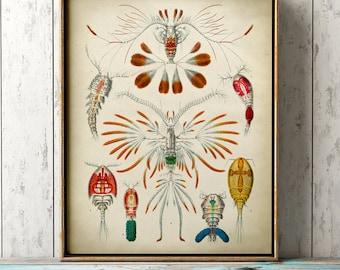 Marine microorganisms print, seal life print, ocean wall decor, marine biology study, antique sea creatures, beach home decor