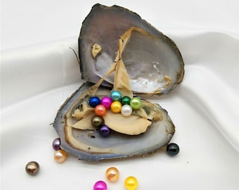 1 PCS Freshwater Oyster with 10 Rainbow Colored Round Pearl Inside, Pearl Party,mini monster oyster
