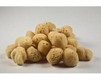 Natural FACE EXFOLIATING sea sponge 2.5-3 inches from Kalymnos