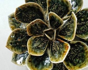 Black Gold Succulent