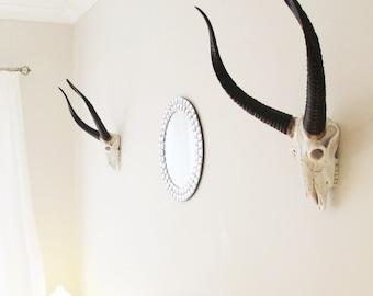 Animal Skull, Skull, African Decor, Skulls, Painted Skull, Antelope Skull, Antlers, Faux Taxidermy, Deer Skull, Animal Skulls, Deer Head,