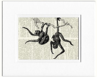 Monkey, spider monkeys print