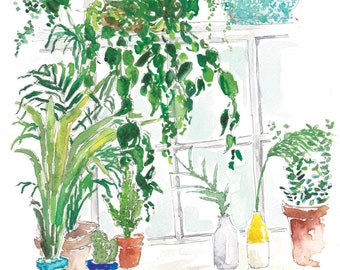 The indoor plant collection
