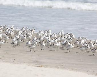Coastal Wall Art, Beach House Decor, Flock of Birds Beach Art, Sanderling Photo, Blue Gray Bathroom Art, Seashore Decor, Ocean Photography