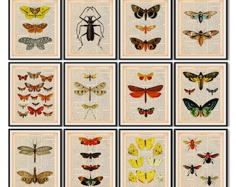 Dictionary print set, Insect print, Scientific illustration, Vintage entomology print, Instant download printable art, 8x10  and 11x14 print