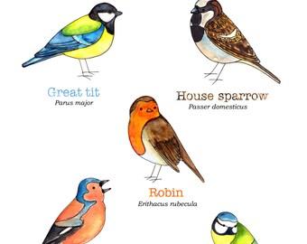 """Print- """"Spot garden birds"""""""