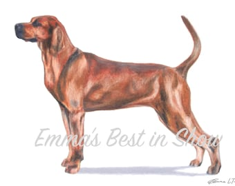 Redbone Coonhound Dog - Archival Fine Art Print - AKC Best in Show Champion - Breed Standard - Hound Group - As Seen in AKC Family Dog