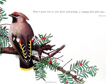 Small Bird Print - Waxwing - 1992 Vintage Book Page - Bird Print with Quote - 9 x 7