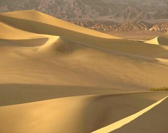 Desert Dune Photography Sand Dunes of Death Valley Yellow art decor