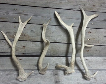 Whole Antler Dog Chew Toy - Fallow Deer - 1 Chew