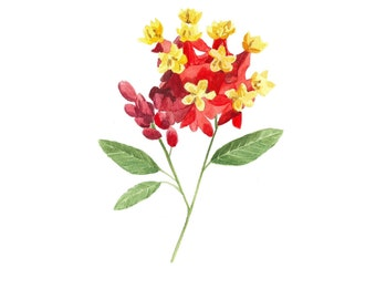 Wildflower Art Print - Botanical Illustration Art - Flower Illustration - Floral Art - Red Home Decor - Botanical Print - Nursery Decor