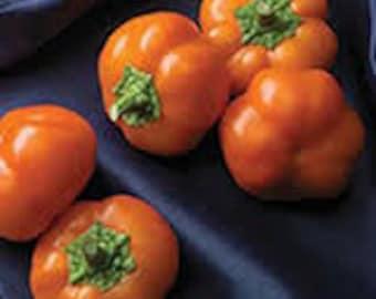 VPPSM) MINI-BELL Orange Pepper~Seed!!~~~~~~~Yummy Stuffers!!