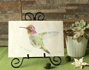 Anna's Hummingbird (Giclee print)