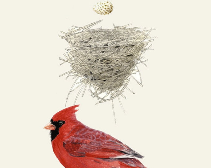 32 Northern Cardinal Nest Egg Plain Background Card