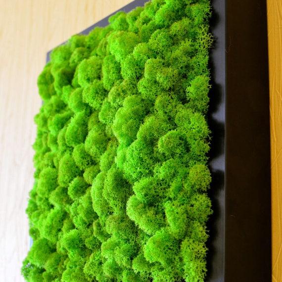 Moss Wall Art Moss Wall Decor Moss Art Housewarming Gift
