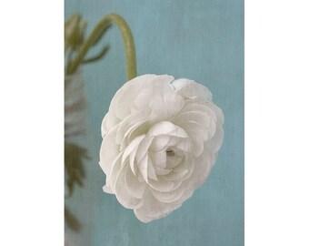 White Ranunculus Art Print,  Flower Photography, Floral Art Print, White Aqua Flower Wall Art, Romantic Bedroom Decor