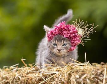 5x7 Grey kitten in flower crown photography print