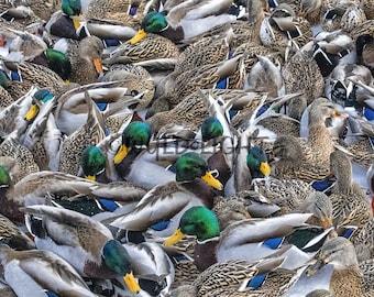 Mallard Ducks, Canada 39391 Duck Wall Art Home Decor Art Modern Art Animal Photography Duck Art Duck Photography Mallard Duck Art