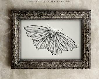 Delicate Moth Art Print ( Vintage Moth )