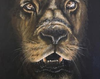 Acrylic lion portrait