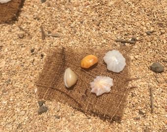 Baby shell earrings!