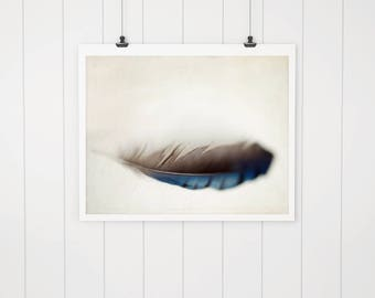 Blue Feather print, feather photography, nature photo, nature print, nature photography, blue jay feather, canvas art, feather art print