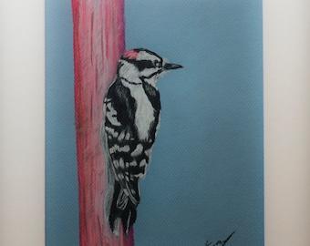 "Downy Woodpecker 9"" X 12"" Pastel on Paper"