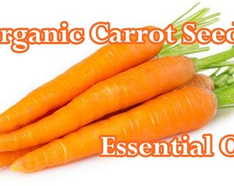 ORGANIC CARROT SEED (Choose Size)Essential Oil: Pure, Full Strength - Imported direct from distiller!