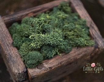 Green Reindeer Moss - Terrariums, Wreaths, Fairy Gardens, Model trains, headbands, air gardens - Preserved organic moss.30- 100gr/ 1-3.5oz