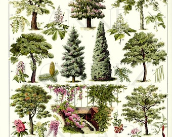 Tree botanical poster 1936 Vintage Botanical art Tree print vintage French country decor Picture of trees pictures of gardens