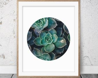 Succulent print, Cactus print, Circle print, Cactus art, Botanical print, Succulent art, Circle art, Home decor, Printable art, Succulent 06