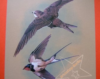 Swifts + Smoke Swallow-vintage print-birds-old book pages-