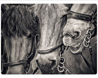 Three Horses Photographed in Black & White Glass Cutting Board Equestrian Decoration
