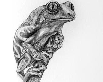Tree Frog Original Pencil Drawing - #78