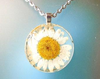 Real White Daisy Pressed Flower Jewelry  Round Glass Necklace