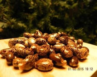 20 castor bean MIXED seeds- 5 zanzibar red + 15 giant green - FREE shipping-  BUY2 get 1FREE