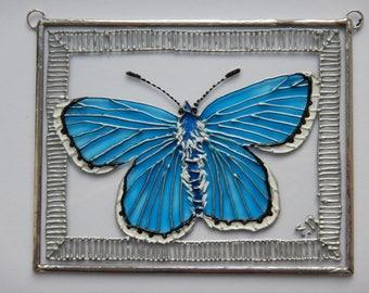Suncatcher - Adonis Blue