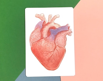 Anatomical Heart - A5 Science Print, Postcard