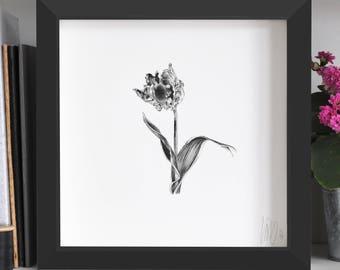 Parrot Tulip Flower Print