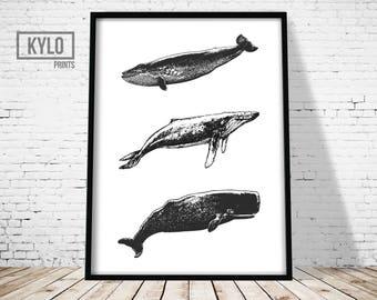 Whale Print, Home Decor, Wall Art, Whale Art, Whale Poster, Nursery Print, Whale Printable, Animal print, Humpback whale, Nursery Animals