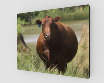 Red Angus Cow Canvas